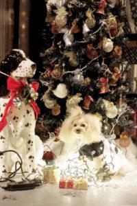 クリスマスツリーと犬