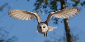 フクロウの飼育と注意点