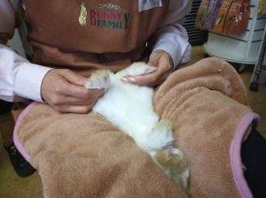 うさぎの爪切り