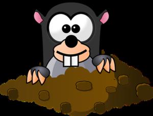 モグラの飼育
