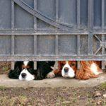 ペット虐待の心理と罪