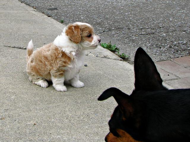 アルパカの飼育とアルパカ犬