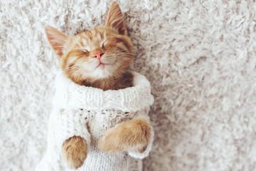 猫の匂い消臭方法