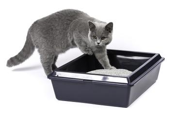 猫の臭いトイレ