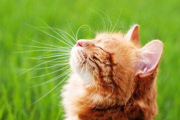 猫のニオイ消臭対策