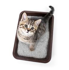 猫のニオイトイレ環境