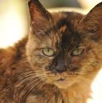 サビ猫の魅力