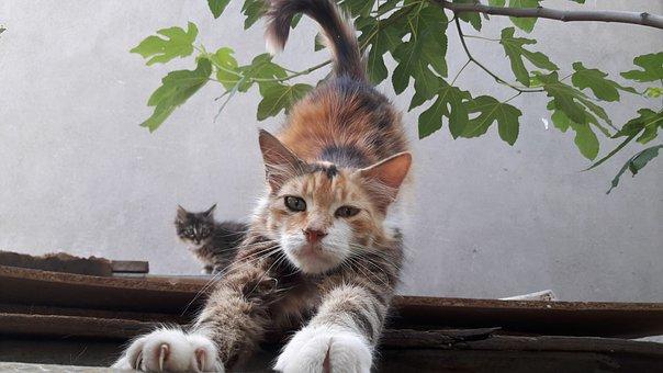 猫のうんちく