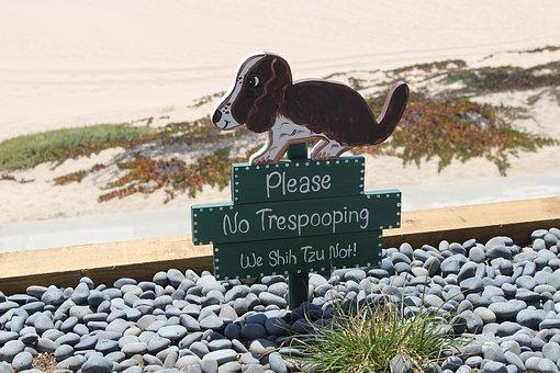 犬のおしっこ消臭