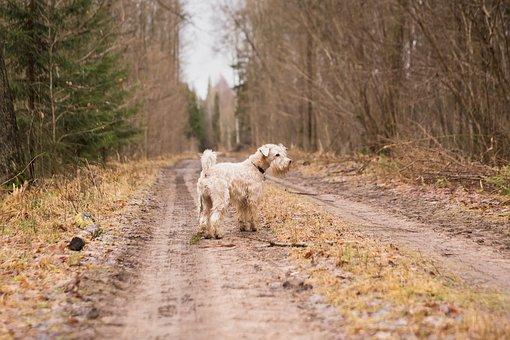 犬の体臭消臭
