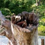 茶臼山動物園への行き方と動物たち